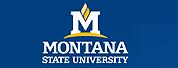 蒙大拿州立大学